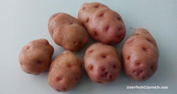 Patatas finas. Su cultivo