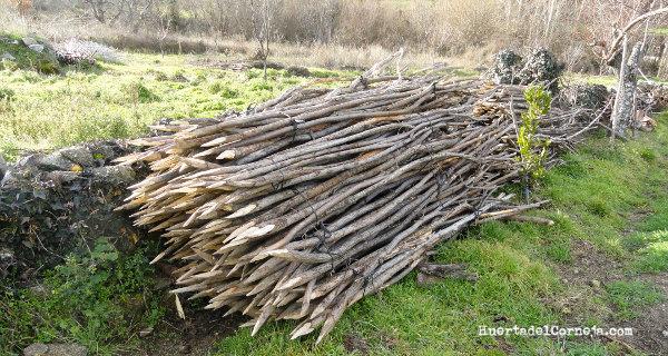 Varas recogidas, afiladas y colocadas para pasar el invierno.