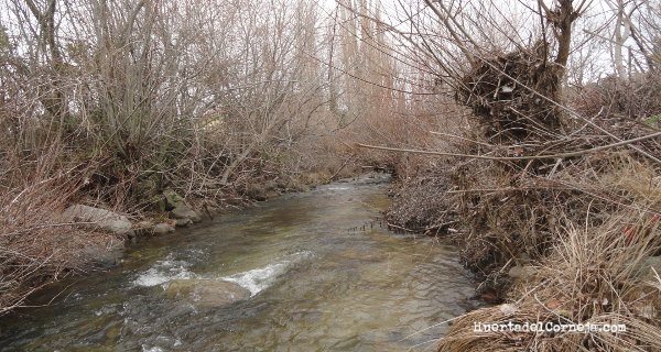 Bardas en las orillas del río Corneja.