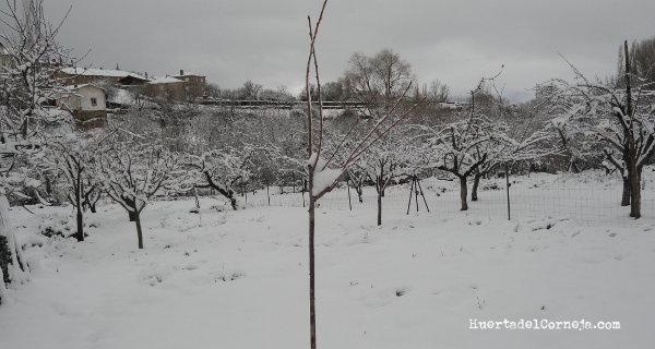 Nuestro patrón de cerezo silvestre.