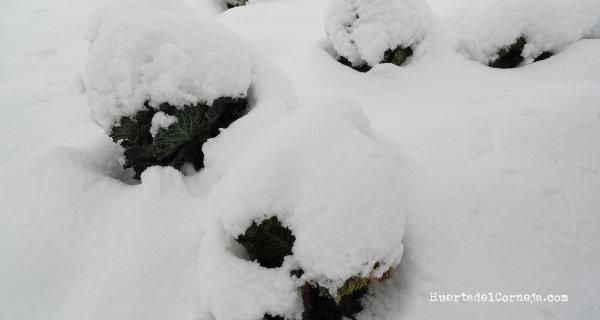 La huerta en invierno