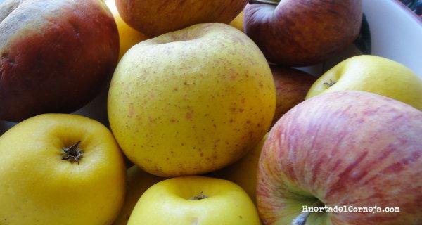 Manzanas de este año.