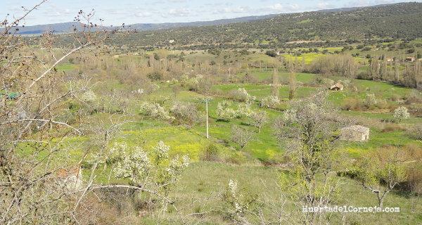 Prados con perales en Villafranca de la Sierra