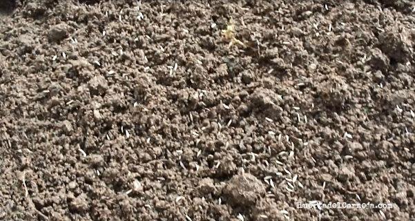 semillas en tierra