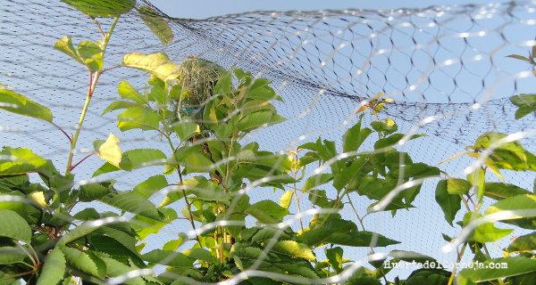Detalle de la red puesta y el palo con hierba en su extremo.