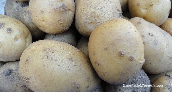Patatas almacenadas