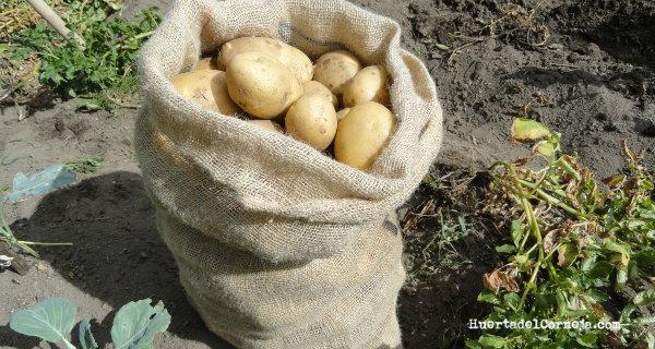 Parte de la cosecha de patatas de este año.
