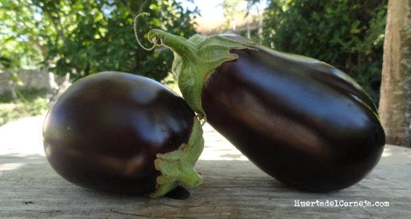 Cómo plantar y cultivar berenjenas