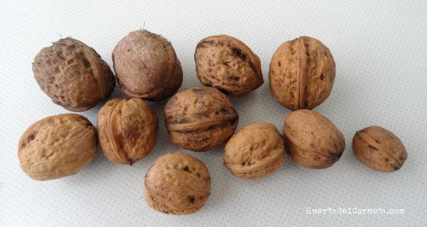 Nueces secas de distintos nogales