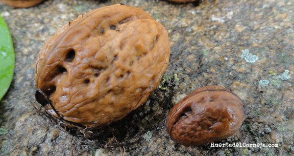 Nueces de distintos tamaños