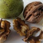 Las nueces. Un alimento funcional