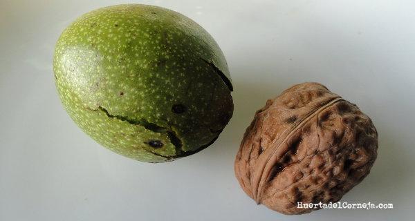De las hojas del nogal y de la cascara verde se extrae nogalina.