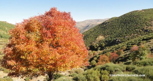 Arroyos de la Sierra de Villafranca en otoño