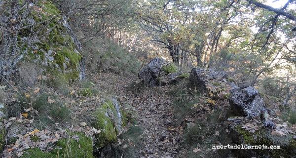 El camino de la sierra.