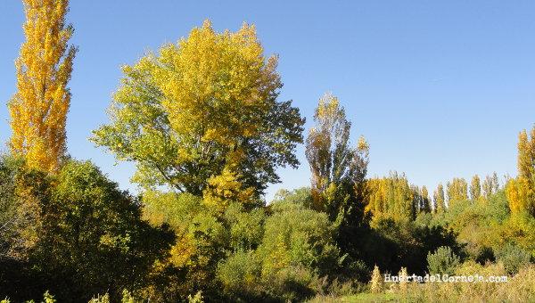 otono  paisajes multicolores