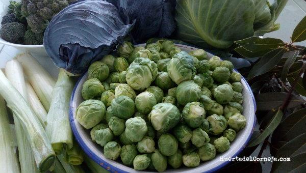 Varias verduras de invierno de la huerta