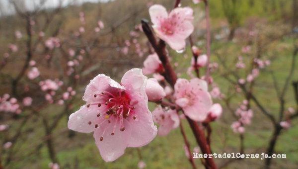 La lluvia persistente arrastra el polen y los insectos no vuelan