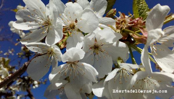 Flores en guindo