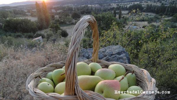 cesta peras ercolina