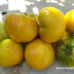 Tomates amarillos