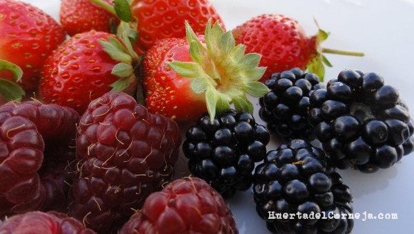 Moras, fresas y frambuesas