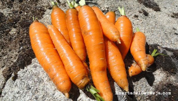 Zanahorias para consumir