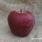 Manzanas rojas. La tentación.