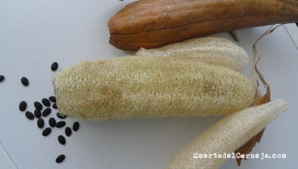 Cómo cultivar una esponja vegetal o luffa