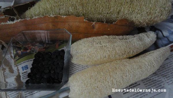 Calabazas de esponjas vegetales pelada, lavadas y semillas